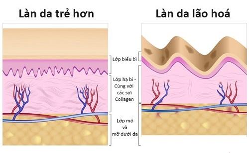 Quá trình lão hóa da diễn ra như thế nào & cách khắc phục hiệu quả 2