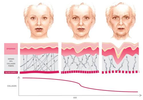 Quá trình lão hóa da diễn ra như thế nào & cách khắc phục hiệu quả 3