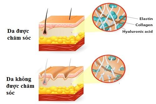 Quá trình lão hóa da - Nguyên nhân & cách phòng tránh hiệu quả 6
