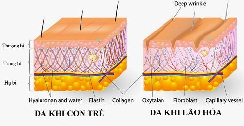 Quá trình lão hóa da diễn ra như thế nào & cách khắc phục hiệu quả 4