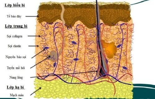 Tái tạo da mặt có hại không? Đánh giá độ hiệu quả của 3 cách phổ biến 1