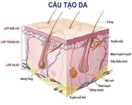 Vi kim trẻ hóa da - Giải pháp HOÀN HẢO cho da căng mịn sau 1 liệu trình 2